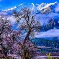 6天西藏林芝桃花环线
